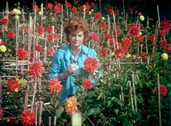 Maria Isabel Carvailhas, l'épouse de Oliveira dans son jardin aux dalhias rouges et jaunes.