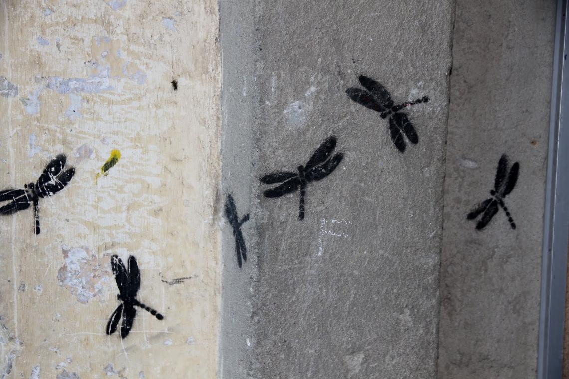 Libellules peintes sur un mur de Corte (avril 2011). Photo Andr Lange-Médart.