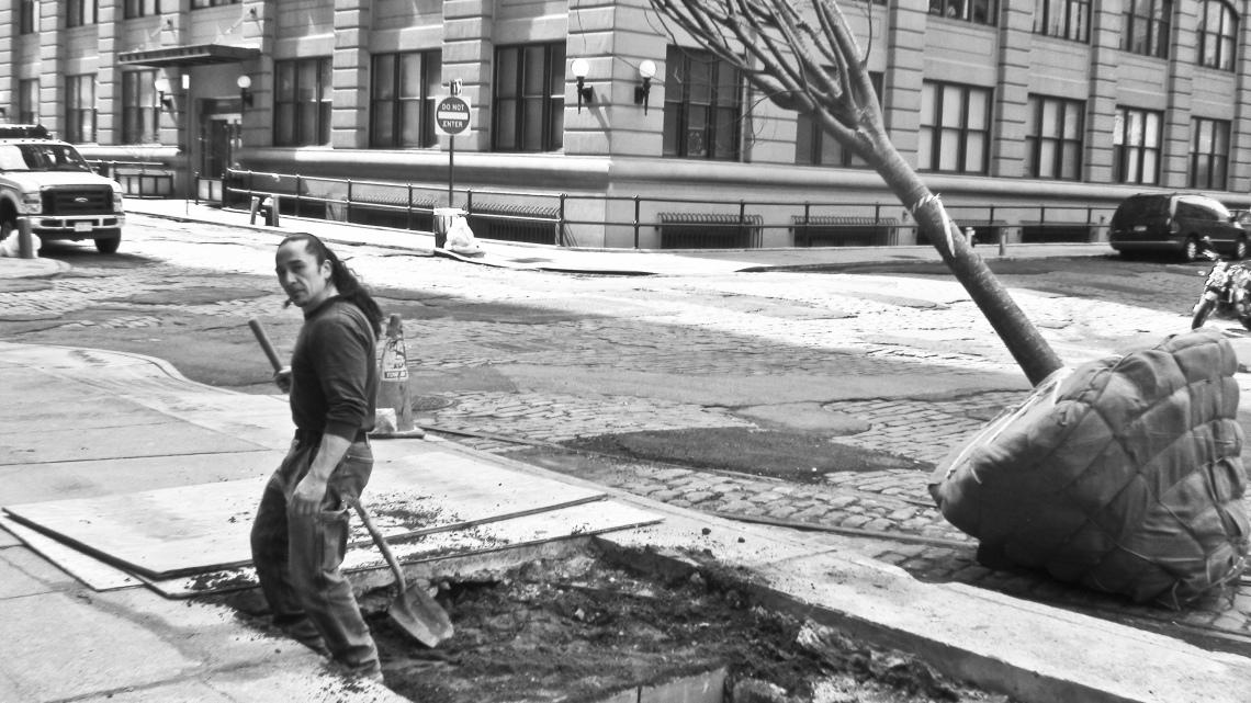 Planteur d'arbre à Brooklyn (mars 2009) Photo André Lange-Médart