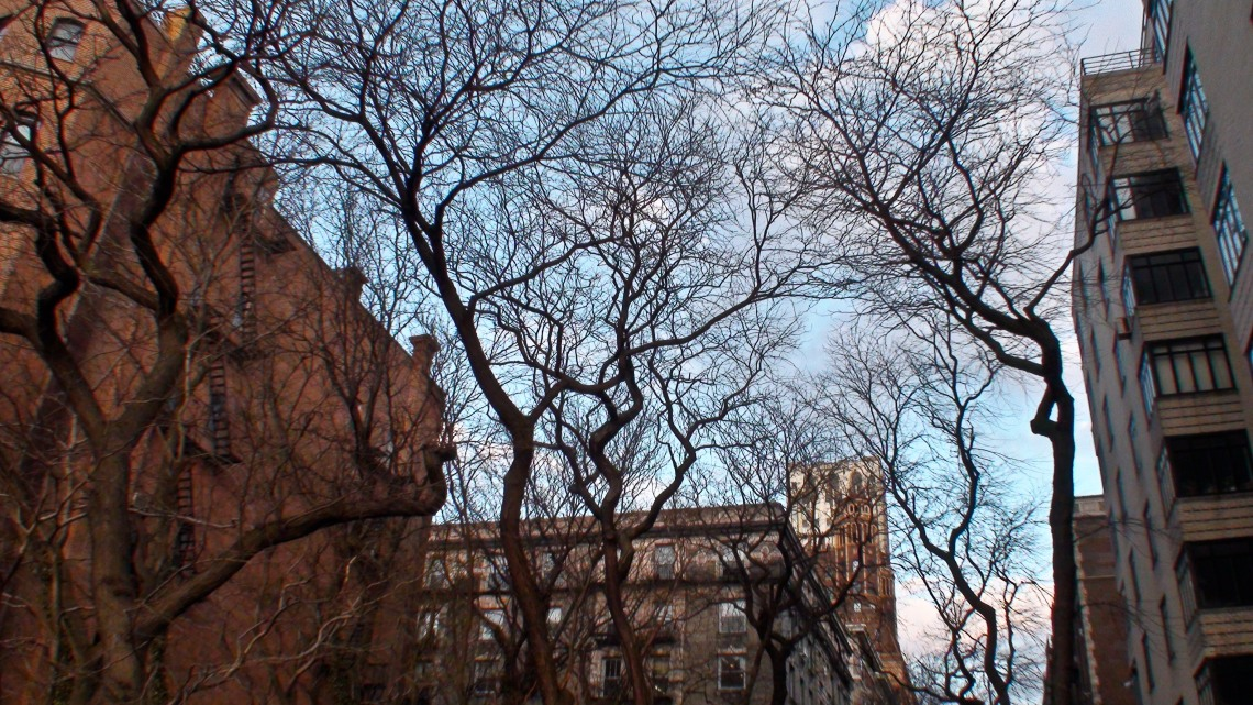 Arbres (Manhattan, mars 2009) Photo : André Lange-Médart